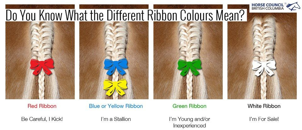 Did You Know What These Ribbon Colours Mean Equine Living