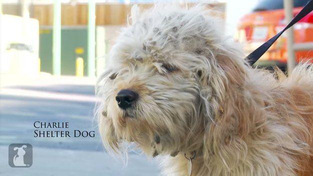 這是查理,他在洛杉磯的路邊被找到。