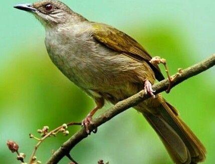Pin Di Birds