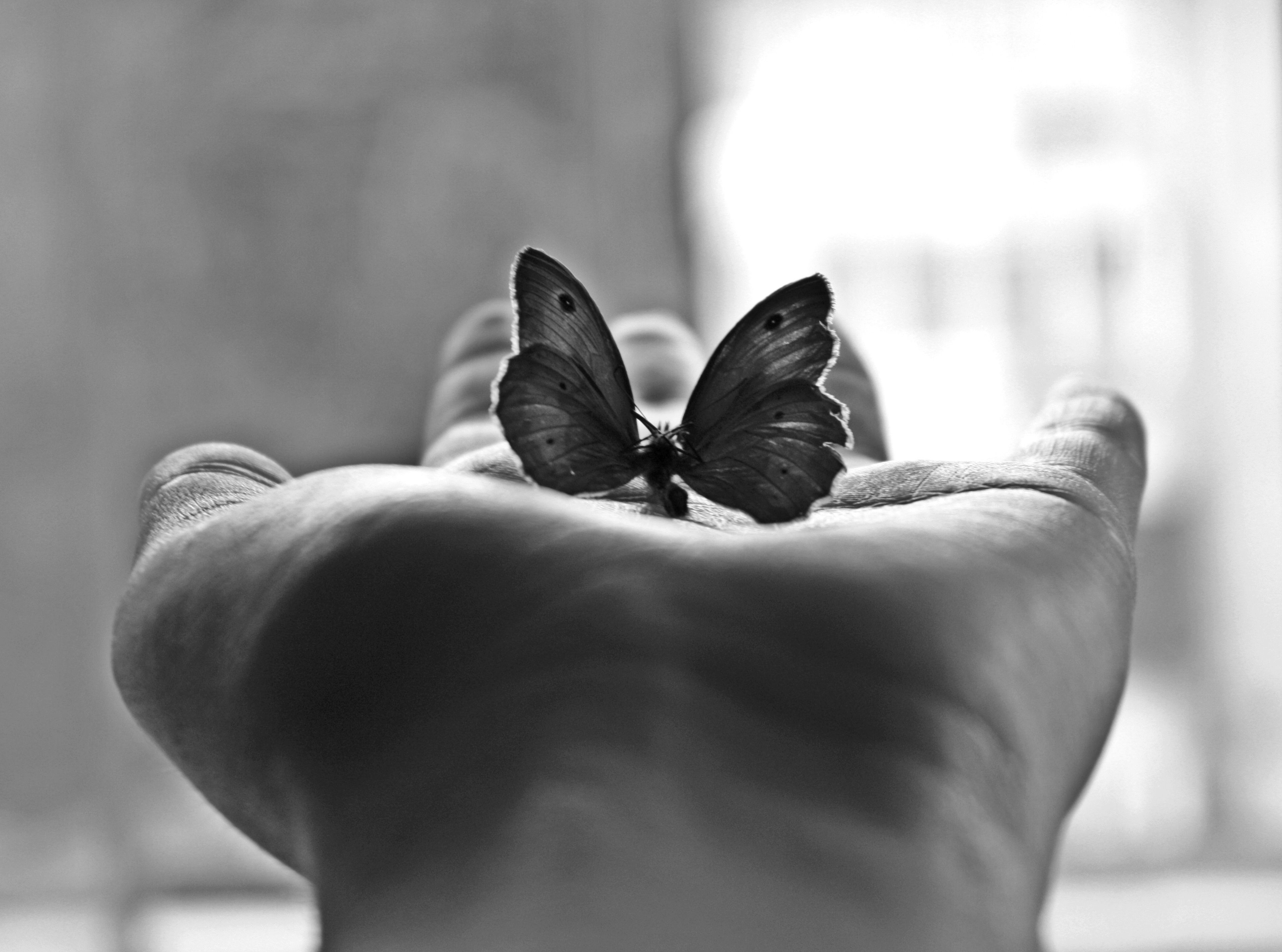 Minimalism palm butterfly black and white photography wallpaper
