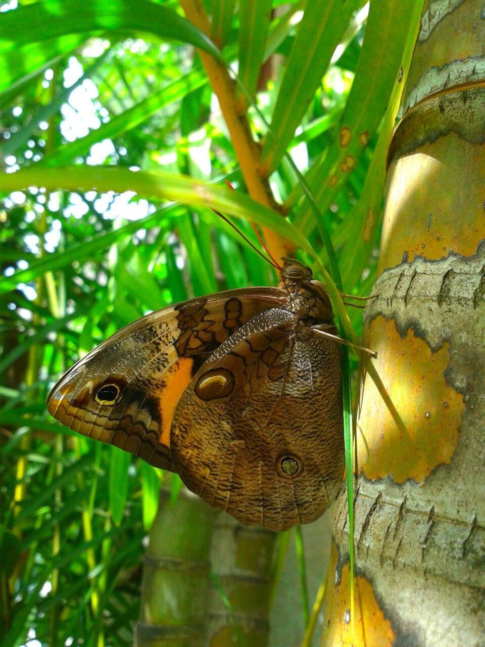 Visita de borboleta no meu jardim