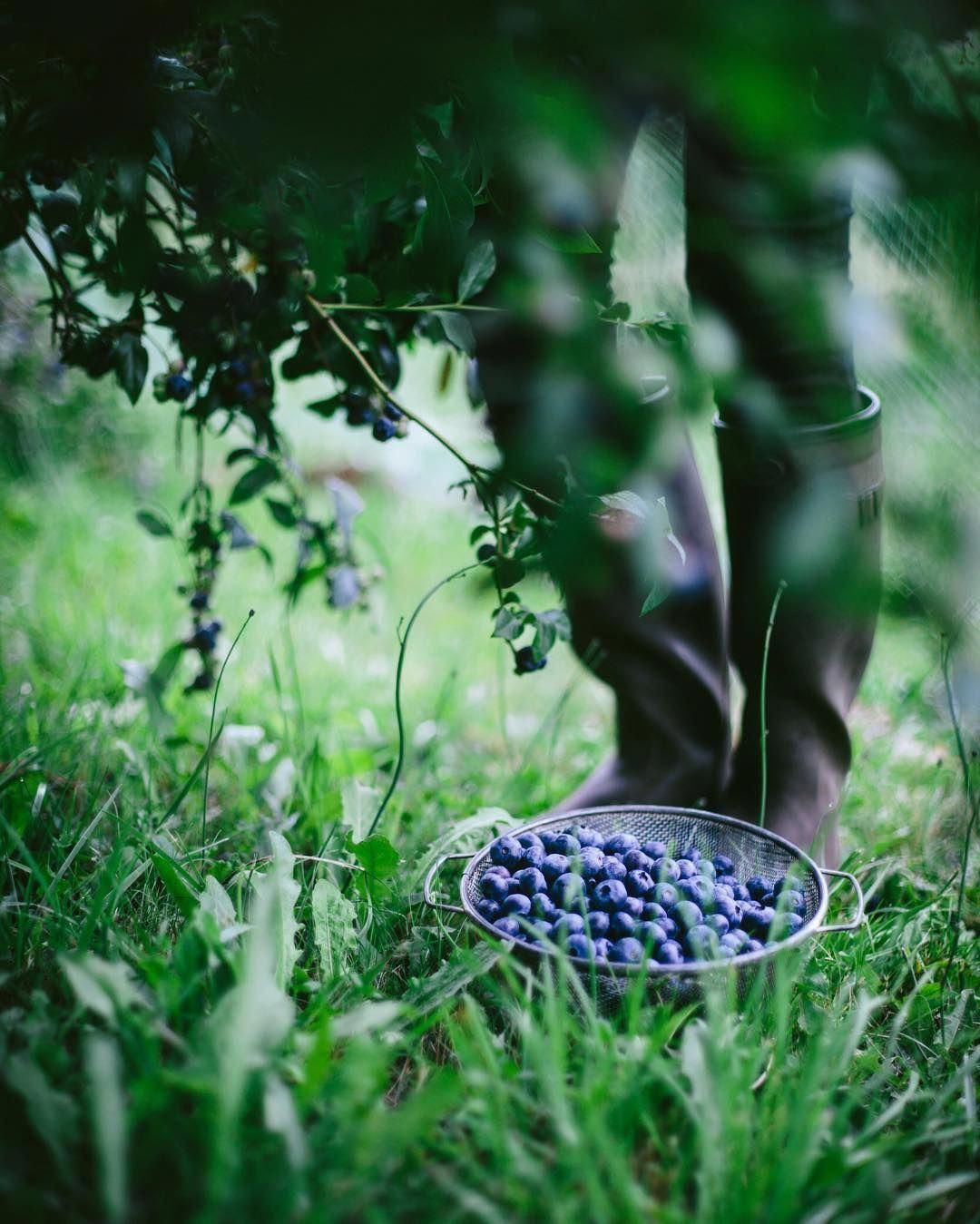 Pin on garden-orchard