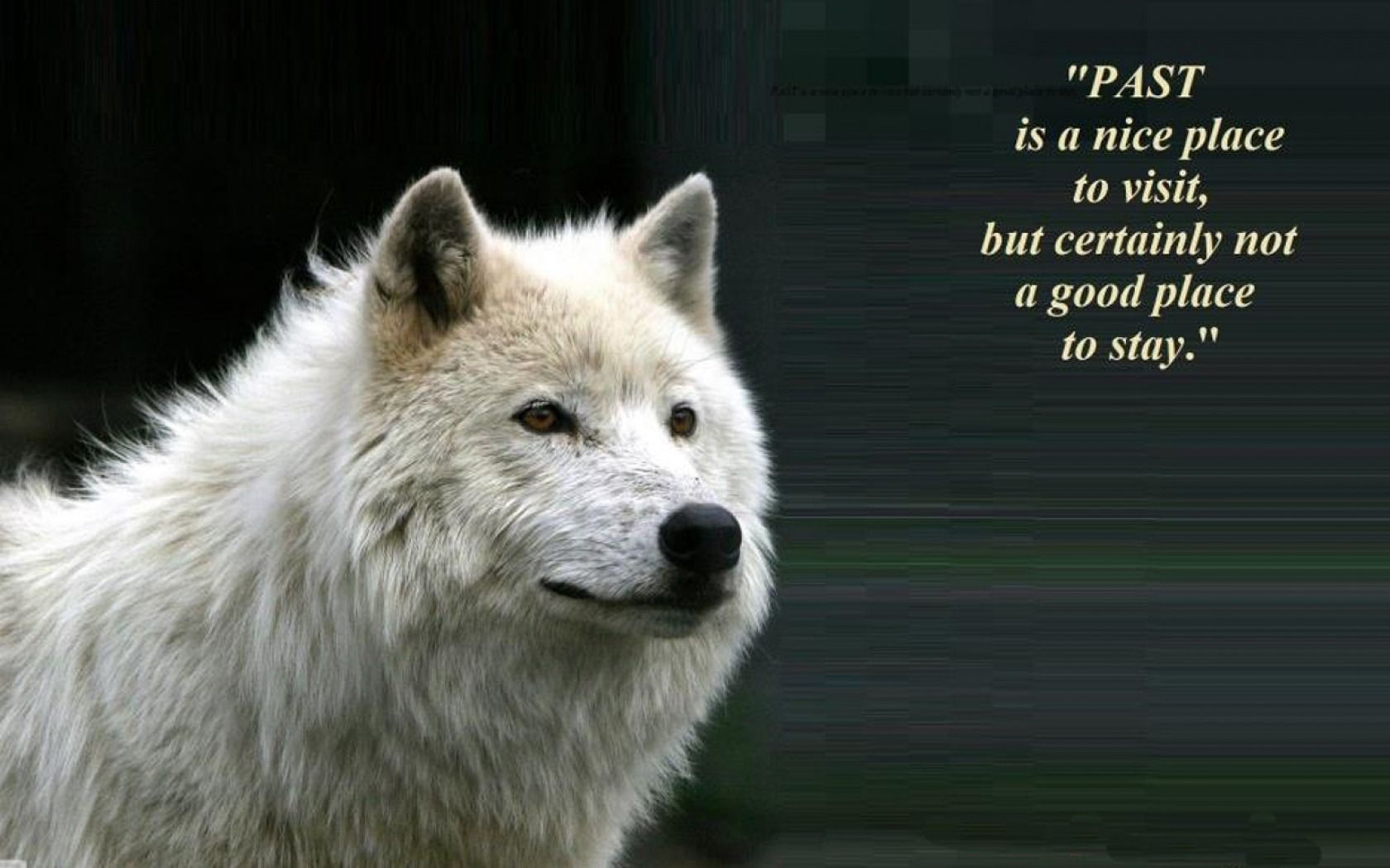 Download wallpaper id 1610409 desktop nexus animals - Animal pak motivational quotes ...