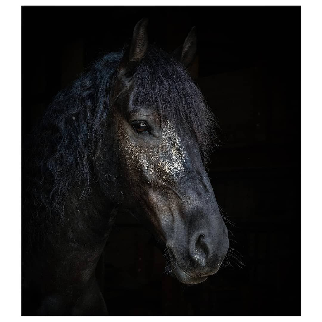 Glitter Horse Glitterhorse Glitzerpferd Lumixgh5 Lumix Horse