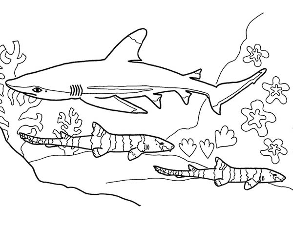 A Blue Shark Hunting On The Seabead Coloring Page Kids Play Color In 2020 Shark Coloring Pages Coloring Pages Ocean Animals