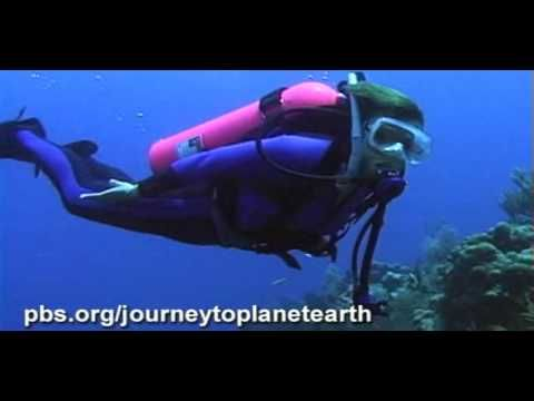 STATE OF THE PLANET'S OCEANS | PBS | Water | Planet ocean