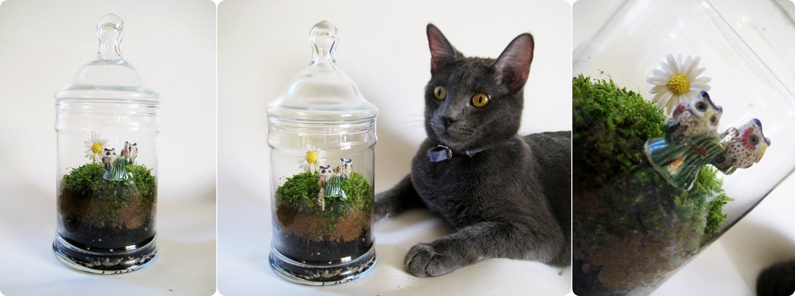 Dabbled moss terrarium tutorial u the gift that keeps giving all