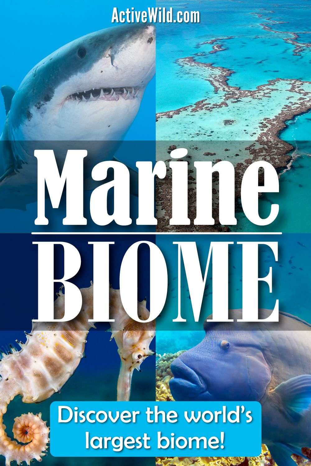 The Marine Biome Facts Pictures Ecosystems Species Threats Biomes Marine Marine Ecosystem