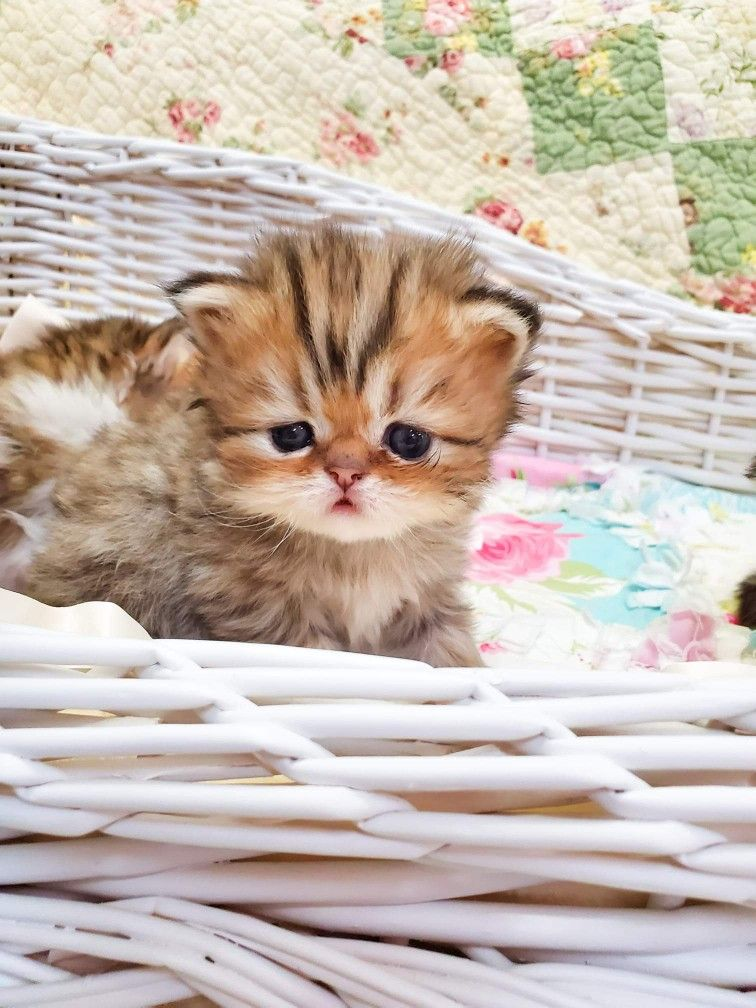 Cute Baby Kitten Cute Cats And Dogs Kittens Cutest Baby Kittens Cutest