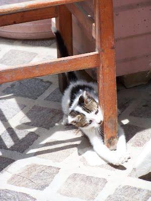 Another playful Chania kitten