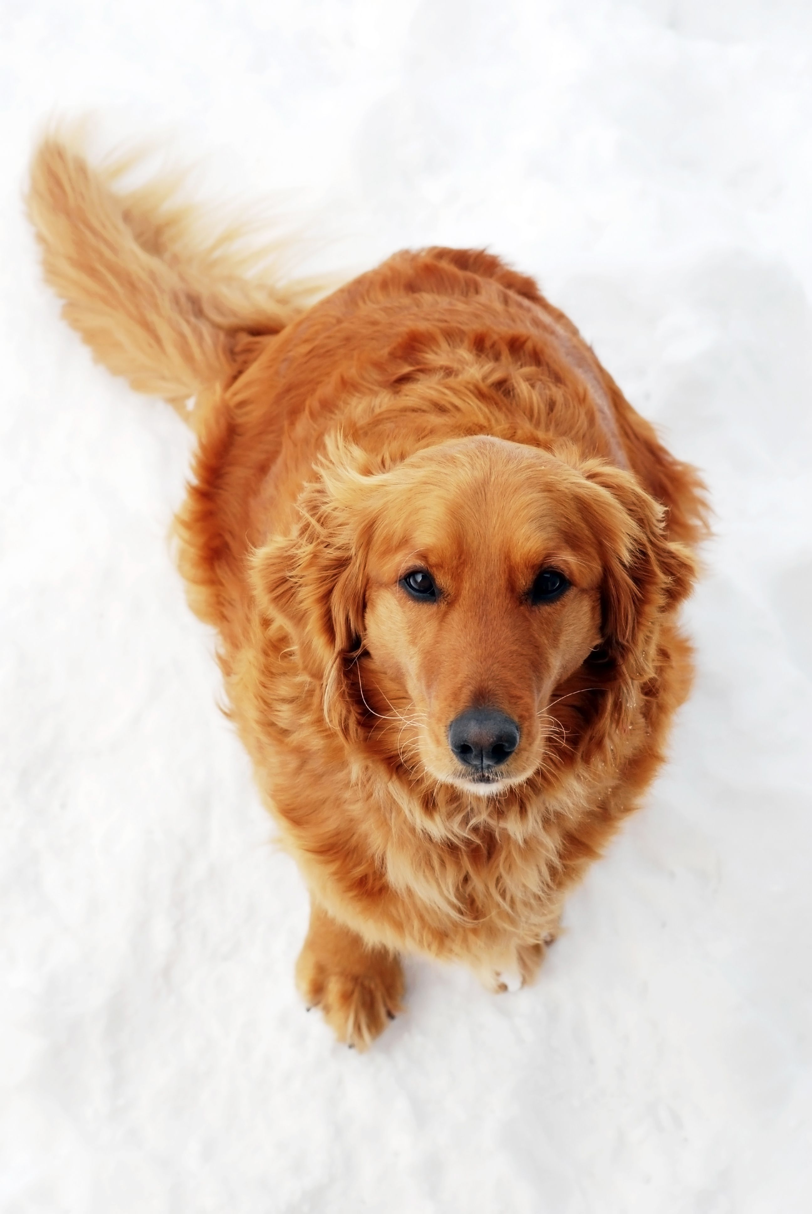 6 Tips For Beating Itchy Winter Skin Dog insurance, Dogs