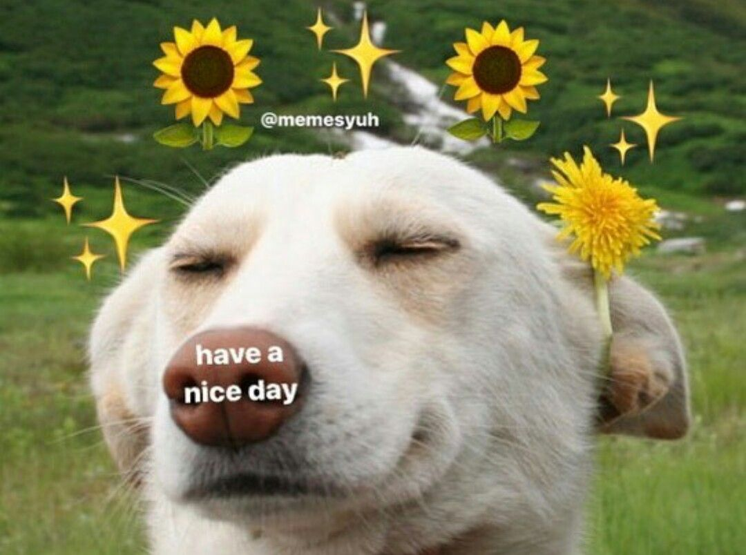 74928c68cafb99db24bc11cb821a2b4c ̗̀@plantmlk ̖́ dog aesthetic pinterest memes, meme and animal