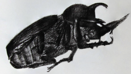 Drawing of a bug from the side