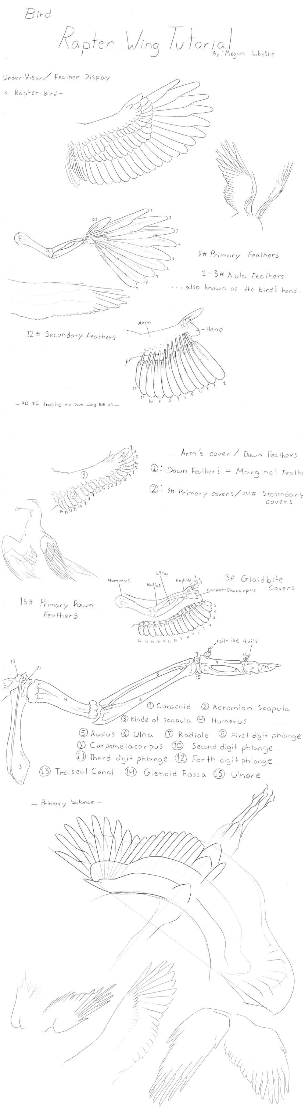 Raptor Bird Wing Tutorial by KutkuMegsan | Draw Angel and Bird Wings ...