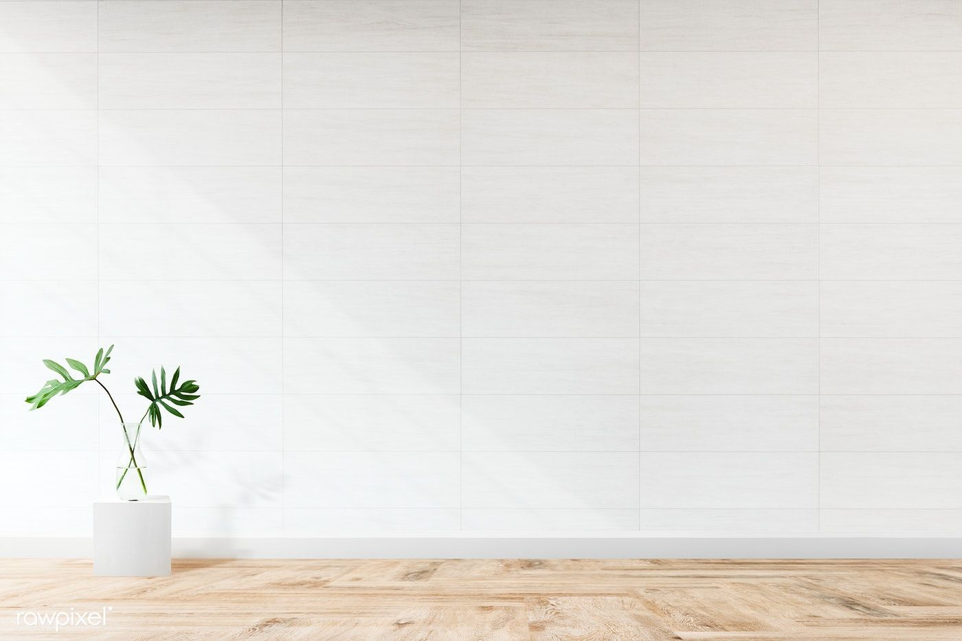 Download Premium Image Of Plant Against A White Wall Mockup 580499 Latar Belakang Dinding Gambar
