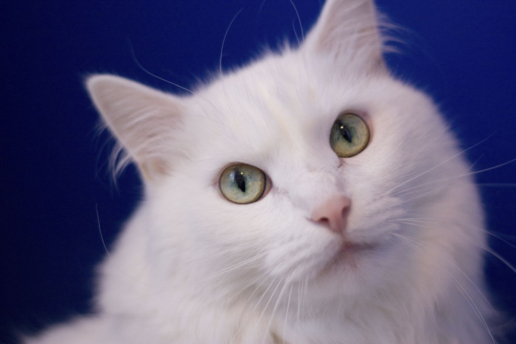 Alternatives to declawing Scratching is one of the ways