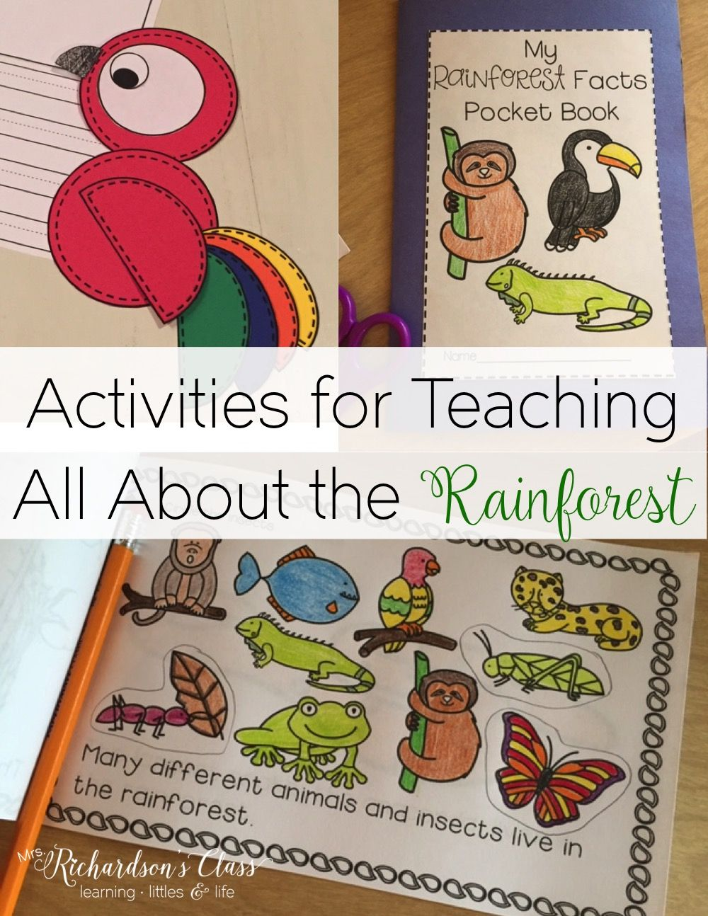 Rainforest Unit A Study of Rainforest Animals and Their