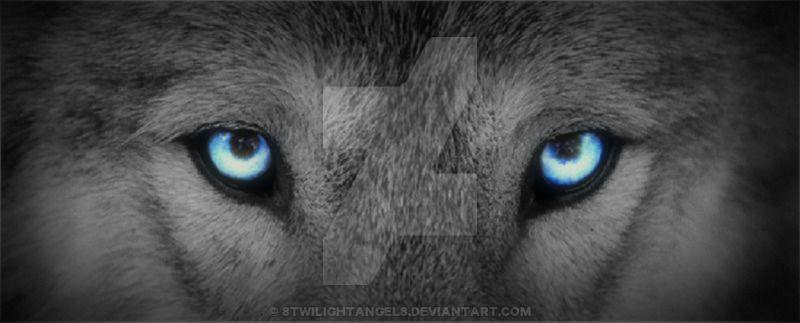 Resultats De Recherche D Images Pour Wolf Eyes Tattoo Designs Wolf Eyes Wolf Eye Tattoo Wolf Eye Color