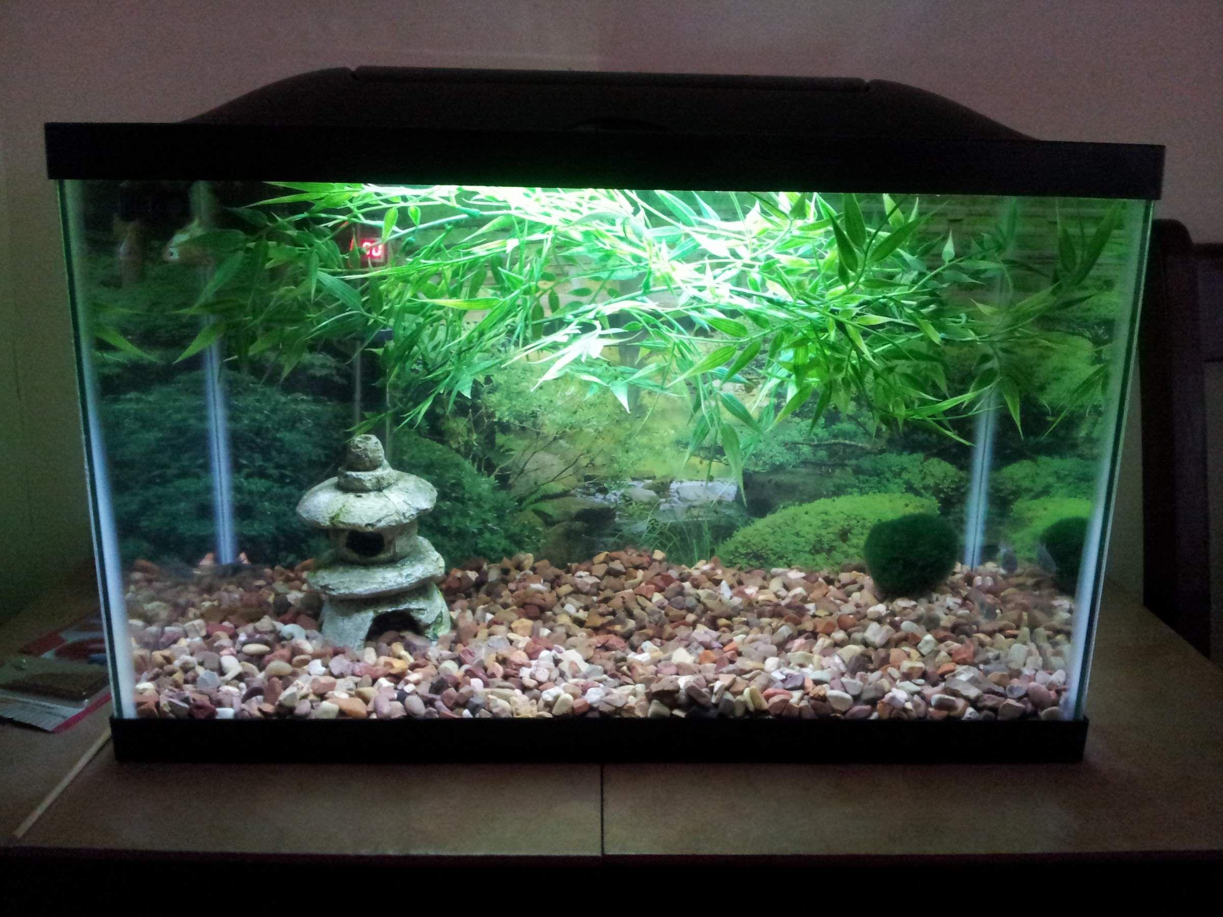 Null Planted Aquarium Cherry Blossom Tree Plants