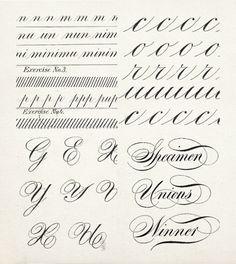 20 Calligraphy Alphabet Specimens Calligraphy Alphabet