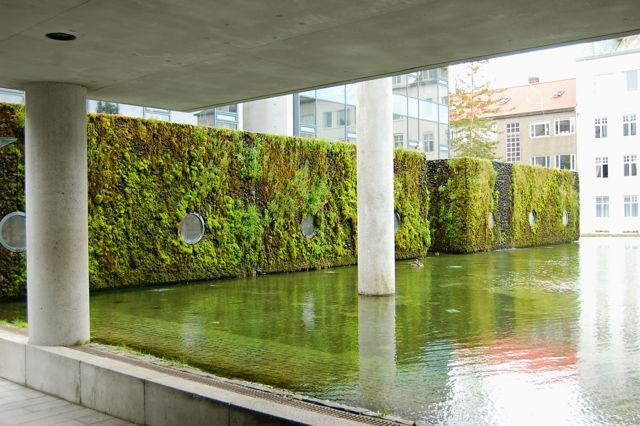 Toronto Gardens Inspiration From Iceland Moss Living Walls