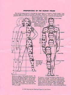 Proporções do corpo humano.