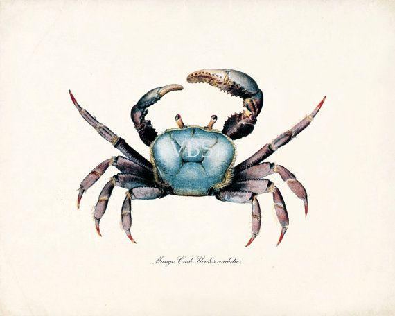 Vintage Blue Mango Crab Art Print Natural by vintagebytheshore ...
