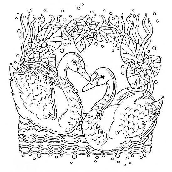 Pin Von Eva Gubik Auf Birds Coloring