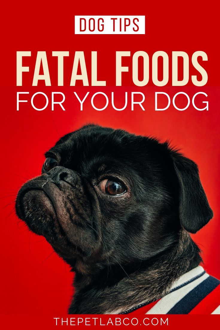 5 Common Foods That Can Be Fatal For Your Dog Your Dog Best Dog