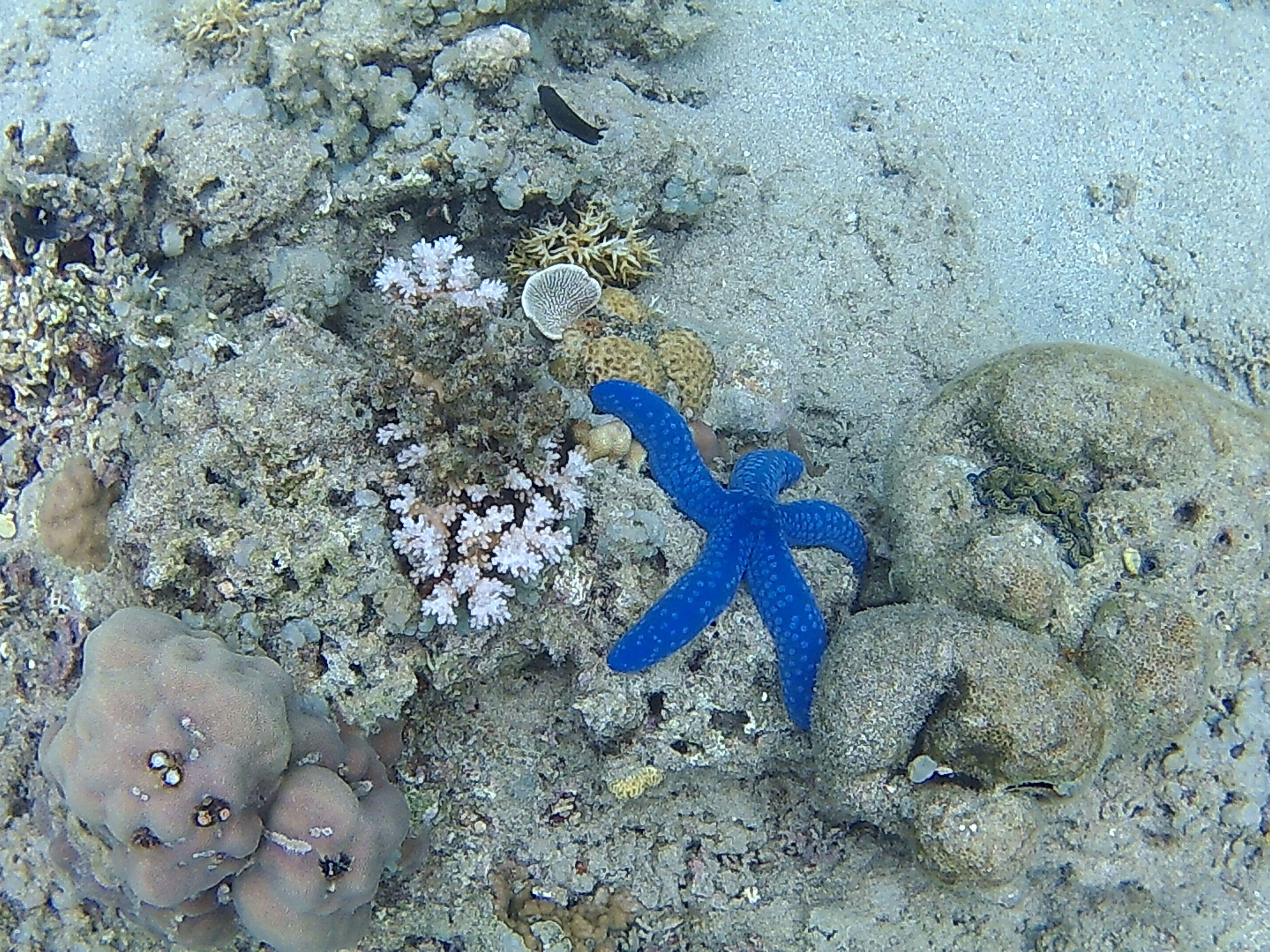 Estrella de mar en Komodo