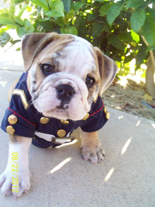 Look At Him In His Dress Blues So Handsome I Would Name Him