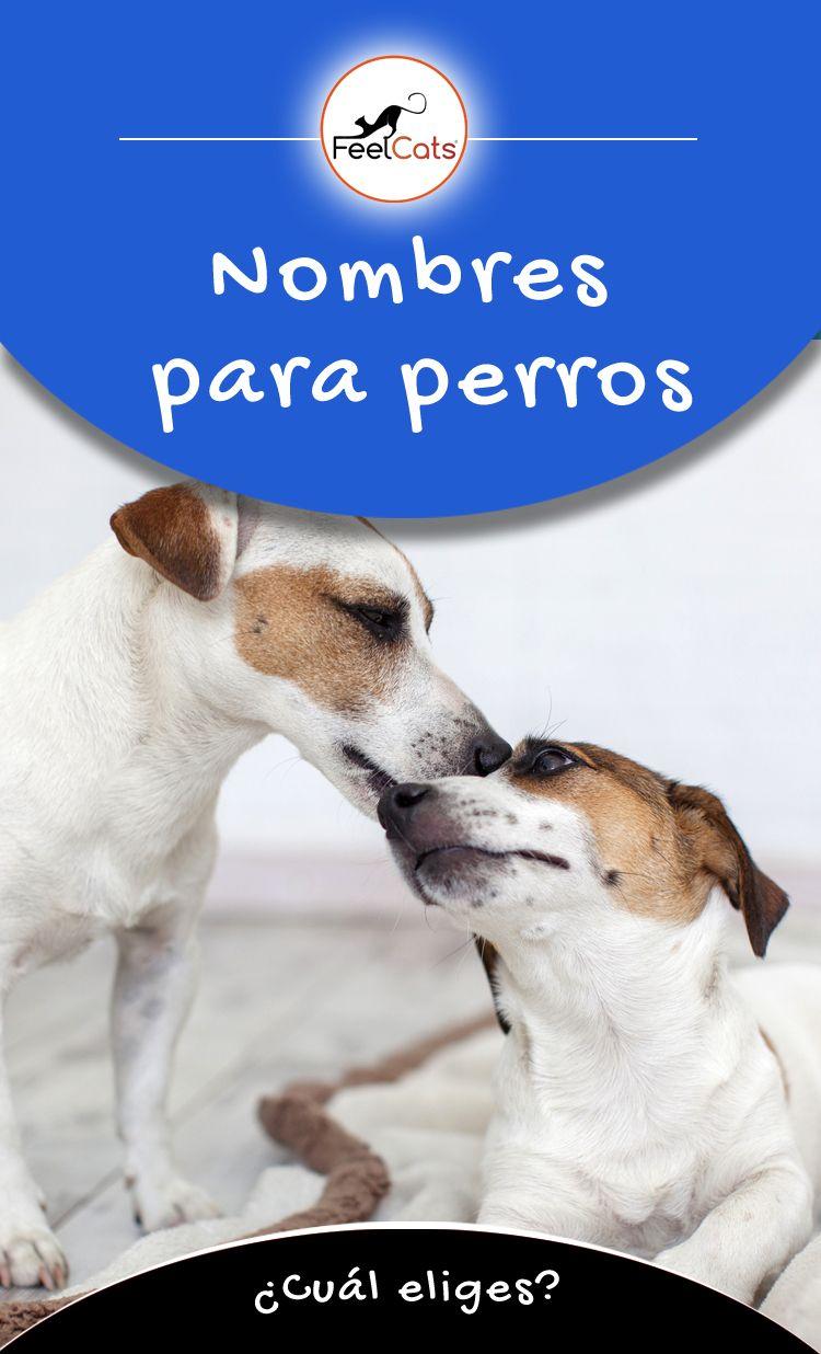 Nombres Para Perros Top 100 Más Bonitos Y Originales Nombres De Perros Nombres Para Perro Hembra Nombres De Perro Hembra