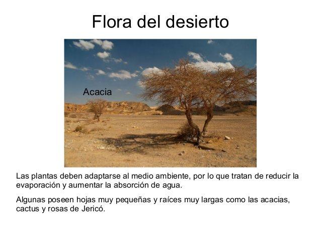 Pin En El Desierto