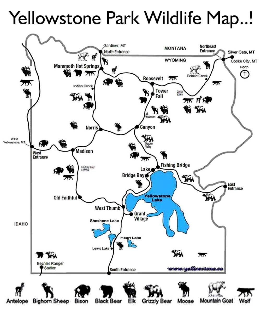 Image result for kids yellowstone worksheet Yellowstone