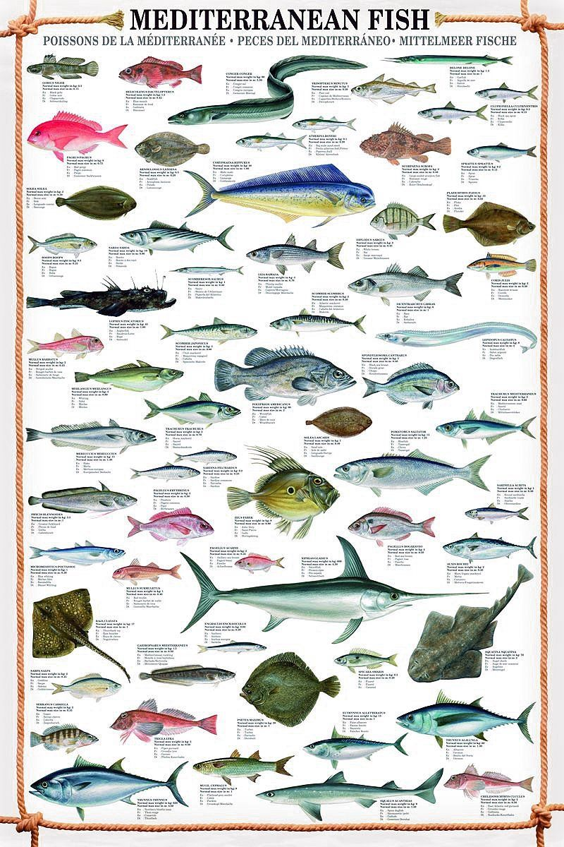 Mediterranean Fish Art Print 61cm X 915cm A Surprise Poster Amazoncouk Kitchen Home