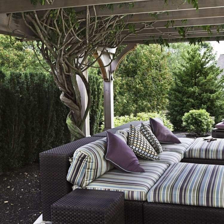 pergola au-dessus de la terrasse décorée de plantes grimpantes