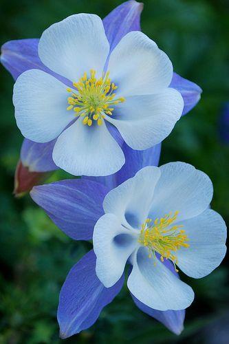 ป กพ นในบอร ด Michigan Flowers