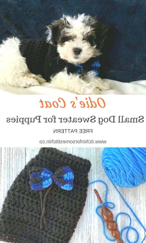 Quick and Easy Crochet Dog Sweater Pattern for Puppies  #crochet #knitting #amigurumi #knit #crochetsweater #crochetponcho #crochetafghan #yarn #crochetscarf #crochetkit #knittingstitches #dogcrochetedsweaters