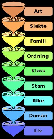 Systematik (biologi) – Wikipedia
