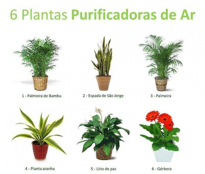6 plantas que purificam o ar jardinagem plantas e horta - Plantas aromaticas interior ...