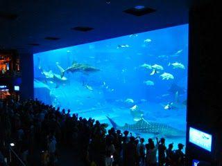 「美ら海(ちゅらうみ)水族館」の巨大な水槽