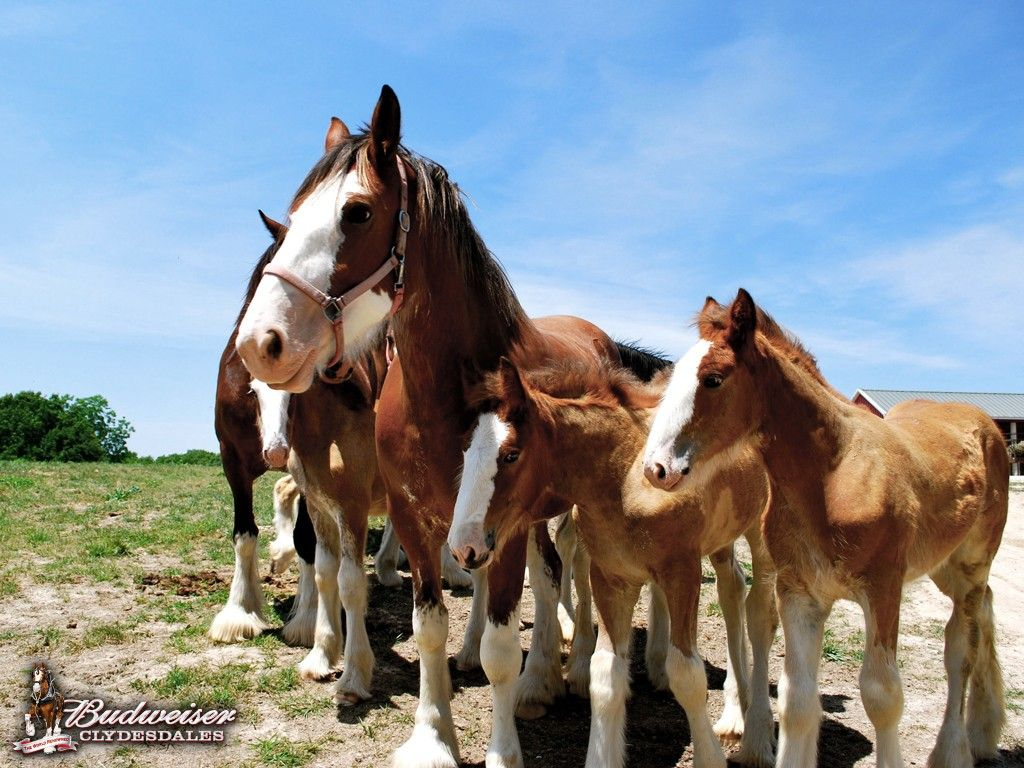 Download Wallpaper Horse Spring - 749a4b8df468ef76eaaa781a4a0d5bde  Perfect Image Reference_356698.jpg