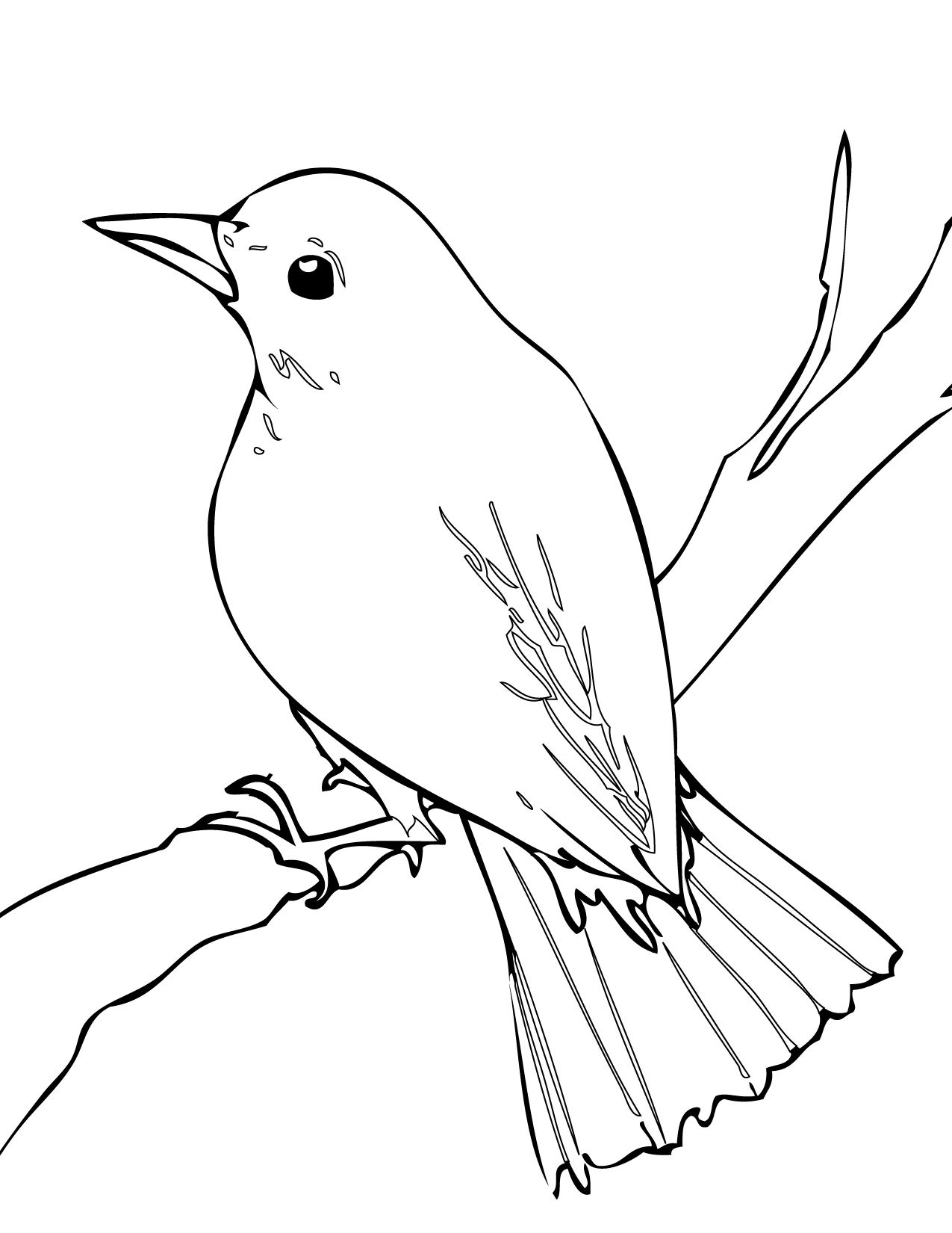 Nightingale Bird Drawing Bird Drawings Bird Coloring Pages