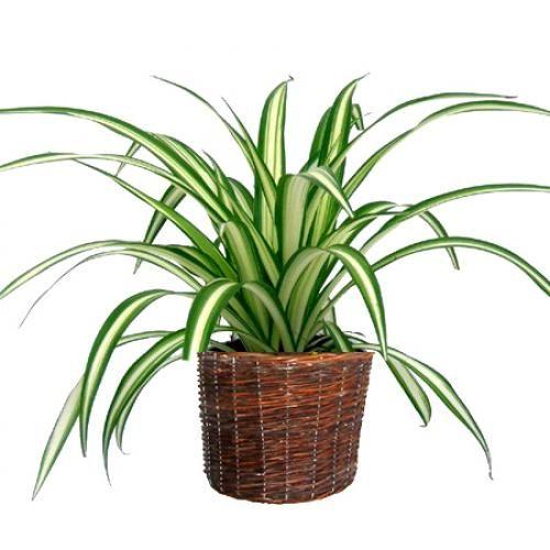plante interieur entretien facile