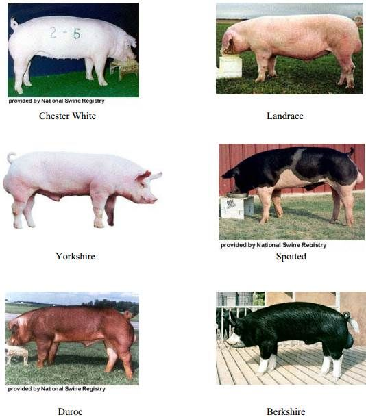 pig farming business plan in nepal how to share
