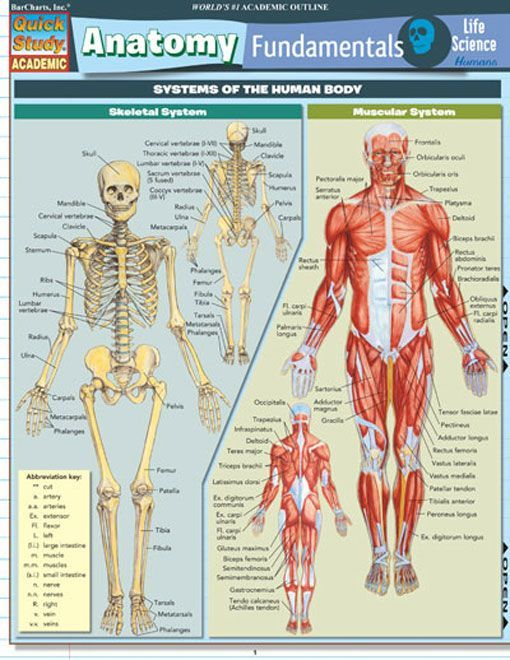 Anatomy Fundamentals Life Science Pinterest Anatomy Nursing