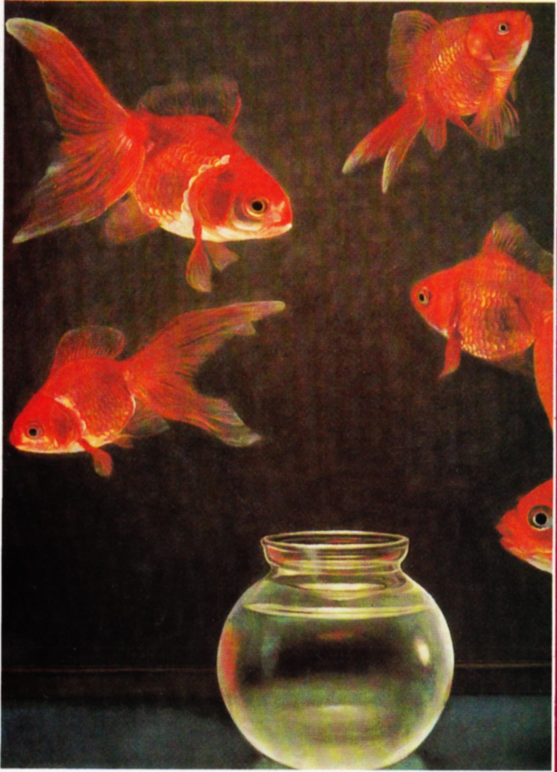 goldfish Kam mak Google Search in 2020 2d art