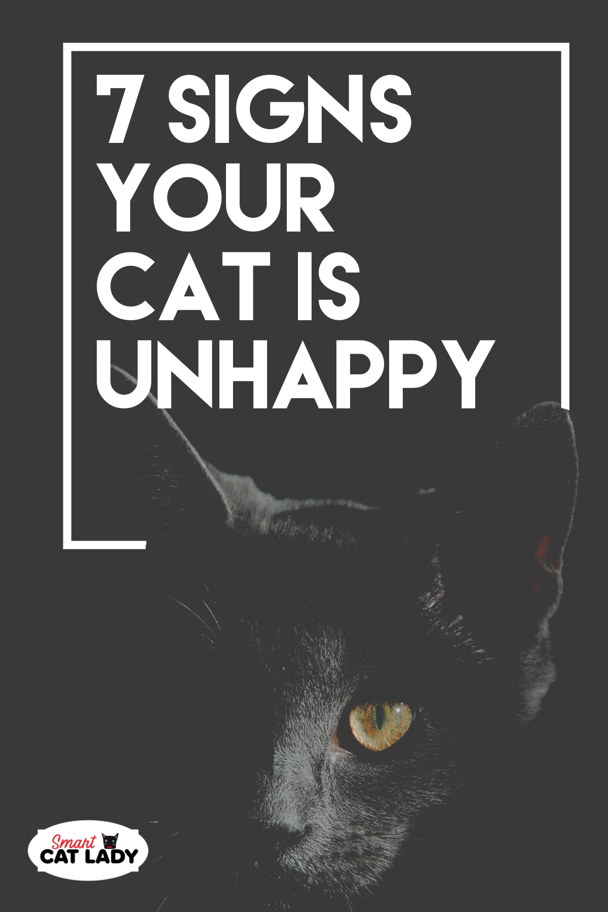 7 Signs Your Cat Is Unhappy Cat Crying Kitten Care Elderly Dog Care
