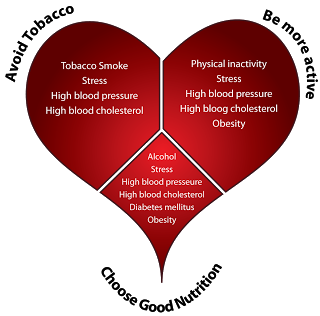Tips To Stay Heart Healthy Heart Diagram High Stress Cardiovascular Disease