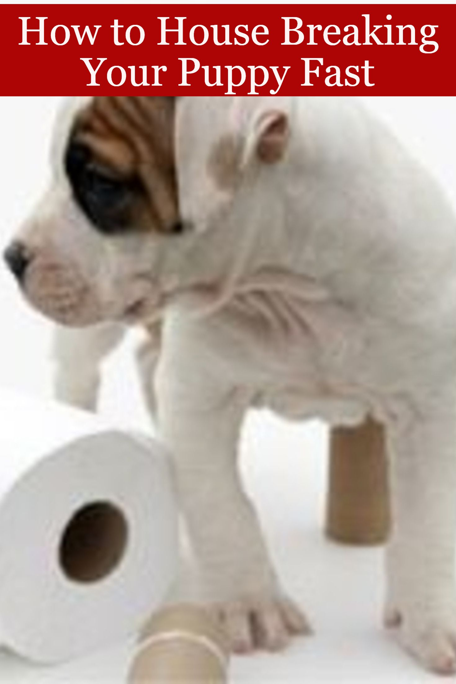 How To House Breaking Your Puppy Fast Puppy Pinterest Puppies